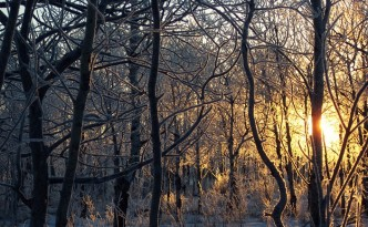 Frosty Sunrise, Kim Newberg, http://www.publicdomainpictures.net/view-image.php?image=8143&picture=frosty-sunrise